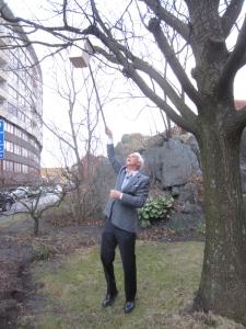 Kent Kilvik hänger upp fågelholken i trädet vid Jaktslottet. Foto. Eskil Malmberg.